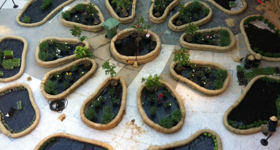 Garden in process