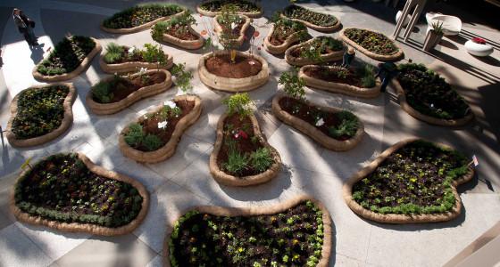 Garden during day